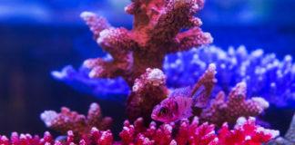 red marine algae herpes remedy hsv 1 2